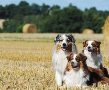 country-dog-6